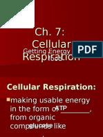 Cellular Respiration Anaerobic and Aerobic