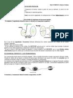 4-La Multiplicacion Celular