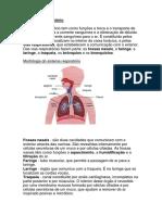 sistemacirculatorio (1)