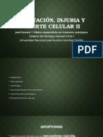 3. ADAPTACIÓN, INJURIA Y MUERTE CELULAR Ii.pptx