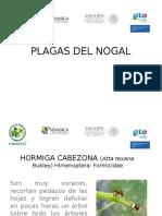 PLAGAS DEL NOGAaL.ppt