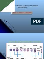 Organización anatomica del sistema inmune, tema 2- 2004.