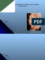 Organización anatomica del sistema inmune, tema 3- 2004.
