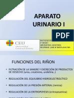 APARATO URINARIO 1