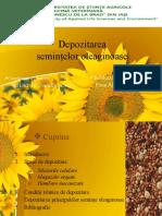 Depozitarea semintelor de oleaginoase.pptx