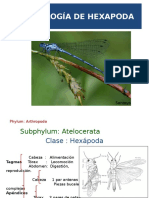 Morfología de Hexapoda
