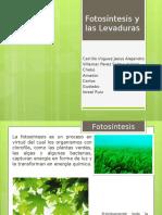 Fotosíntesis y las Levaduras.pptx