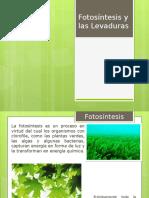 Fotosíntesis e Historia de Las Levaduras