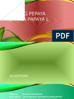 Batang Pepaya