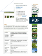 Aroeira Pimenteira - Schinus terebinthifolia, em tubete de 290 cm³, a partir de R$1,00 - Confira! Compre online!.pdf