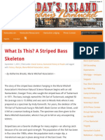 Striped Bass Skeleton