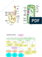 Animals Cell Plant Cell