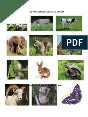 Haiwan Yang Makan Tumbuhan Sahaja