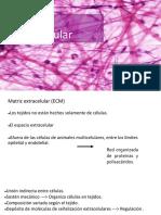 Matriz extracelular.pdf