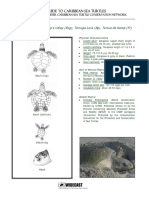 WIDECAST Guide to Caribbean Sea Turtles Kemps Ridley