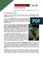 Enfermedad respiratoria en reptiles.pdf