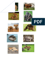 animales mamiferos.docx