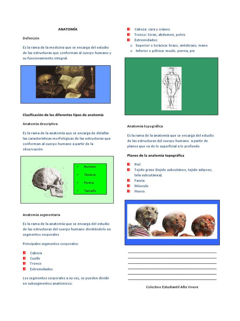 1. Anatomía.pdf