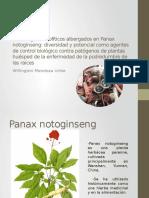 Los Hongos Endofíticos Albergados en Panax Notoginseng