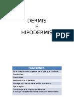 Dermis e Hipodermis Alondra