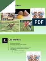ud-52-enzimas-121125114732-phpapp02