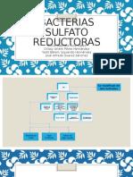 Bacterias Sulfato Reductoras
