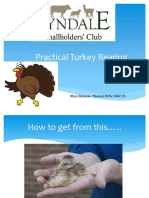 Practical Turkey Rearing