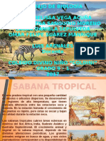 Sabana Tropical