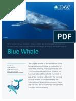 Blue Whale Fact Sheet