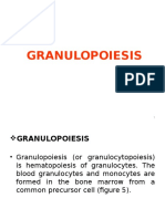 Lecture2-Granulopoiesis