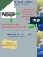 Biol Tilapia y Calidad Agua 3
