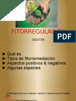 Fitorregulación