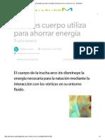 Vórtices Cuerpo Utiliza Para Ahorrar Energía_ La Trucha Arco Iris y Trucha Arco Iris - AskNature