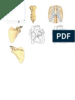 blue flashcards anatomy.docx