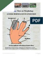 More on Morphology of Porifera