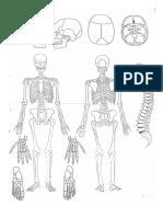 Gambar Otopsi (Bag. dari Form. Otopsi).doc