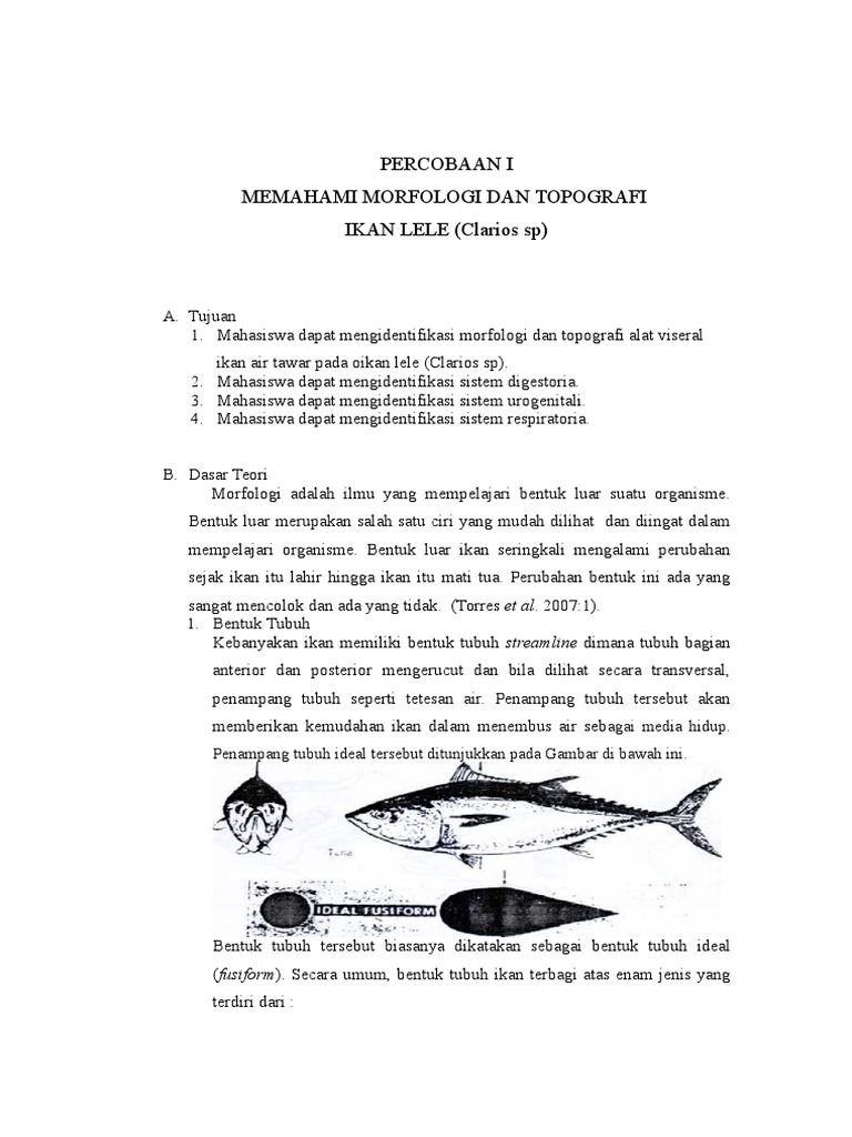 Unduh 70+ Gambar Morfologi Ikan Lele Terbaru