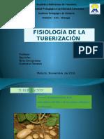 Fisiologia de La Tuberizacion
