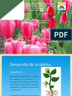 Diapositivas de auxinas.pptx