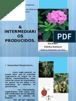 Fisiologia Vegetal, Intermediarios Producidos
