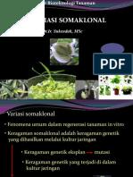 P4-Variasi_Somaklonal