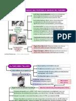 Fascismos Causas y Caracteristicas (2012) Esquema