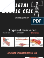 skeletal muscle cell