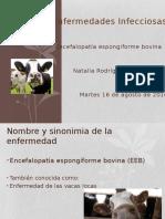 EEB, Vacas Locas