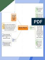 Mapa Conceptual Escuela Finalista