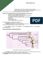 1-La Evolución Humana.doc