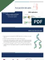 Exposición replicación ADN