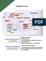 TEMA 14. Dominio Archaea. Phylum Euryarchaeota