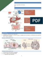 Patologia Hepatica