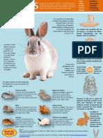 Infografía conejos.pdf